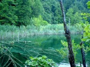 プリトヴィツェ湖群国立公園の画像 p1_12